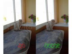 Remove watermarks from photos. Avito, Yandex, Domofond, Cian